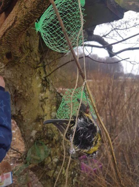 Fuglekugler med plastnet kan være en dødsfælde for dyr
