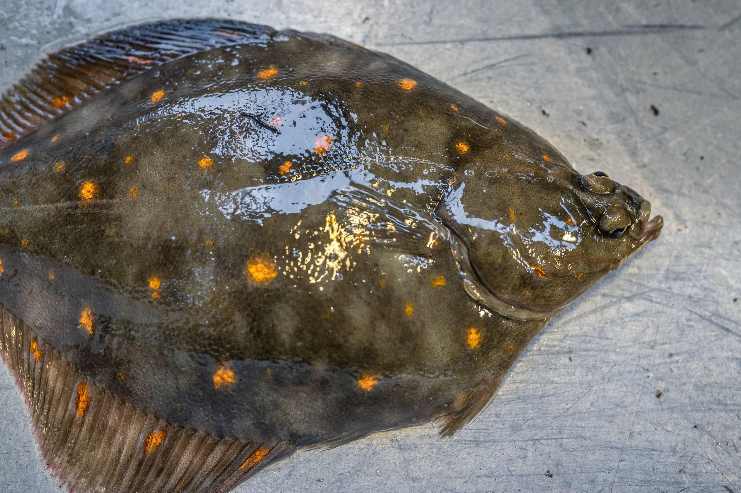 Ny mærkningsordning: Nu kan du endelig få naturvenlig fisk på tallerkenen