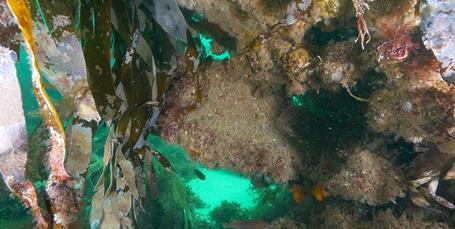 Gule Rev og Hirsholmene: Der fiskes ufortrødent på vores beskyttede havnatur
