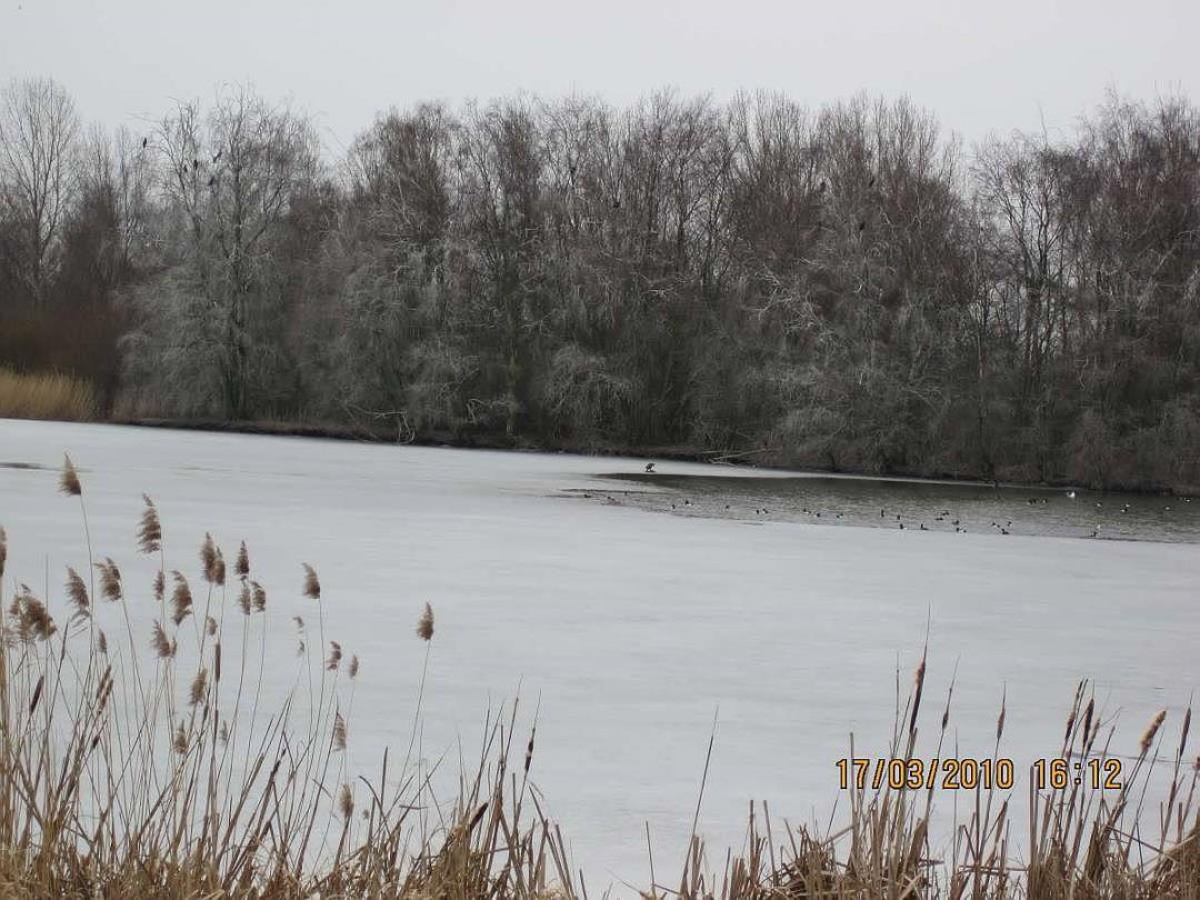 Vinterfugletur til Tueholm Sø, Store Vejleå og De Våde Enge i Kongsholmparken