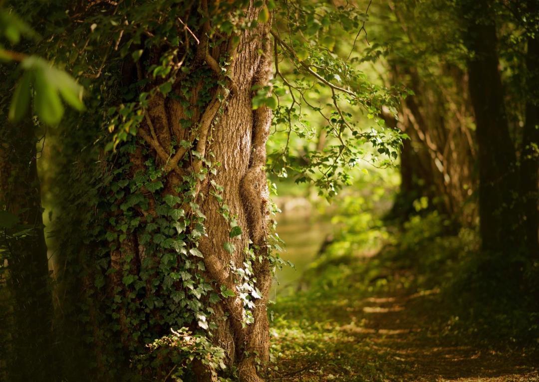 Forårstur i Hollænderskoven