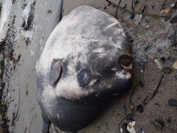 Hvad sker der under havets overflade om vinteren?