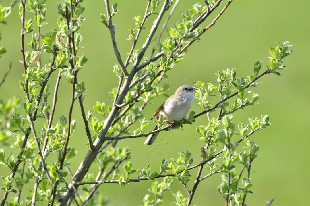 Morgenfugletur på sporet syd for Herskind