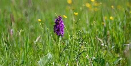 Blomsterengen er vores bedste klimaløsning