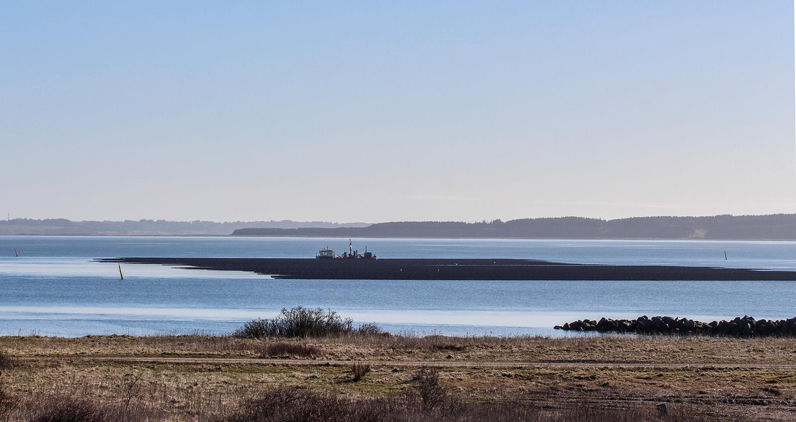 Kæmpe interesse for muslingeopdræt i Limfjorden: Hovedløse tilladelser er en risiko for havmiljøet
