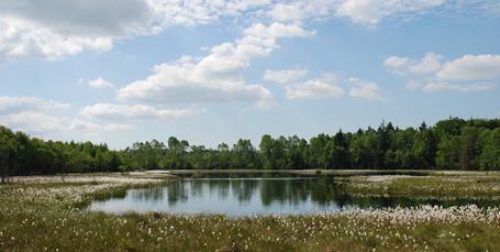 Bykommuner i bund og Fanø i top: Ny undersøgelse rangerer naturen i Danmark