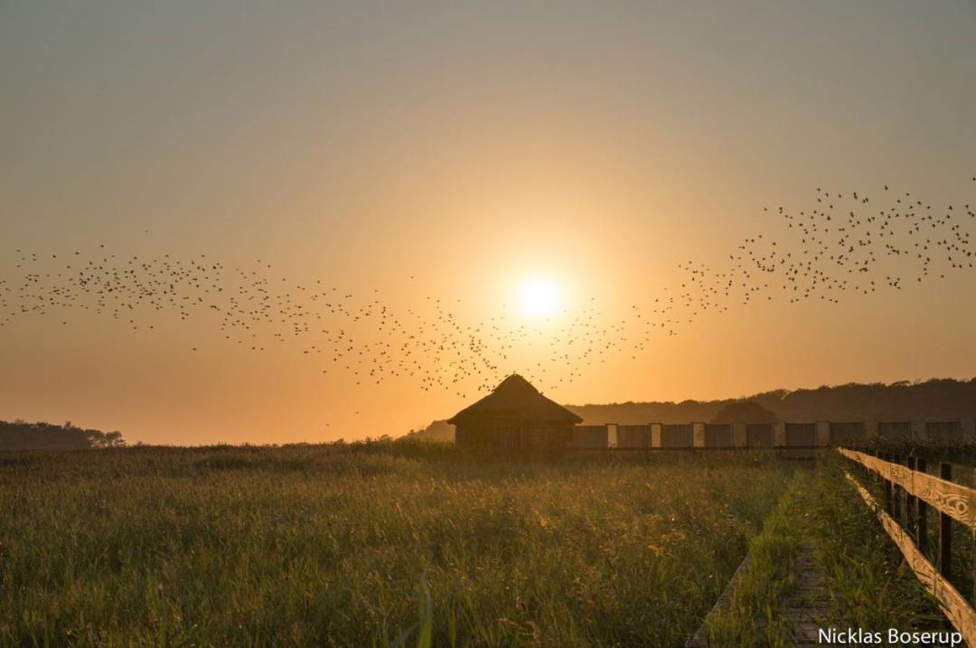 Fugle- og flagermustur til Tåsinge Vejle