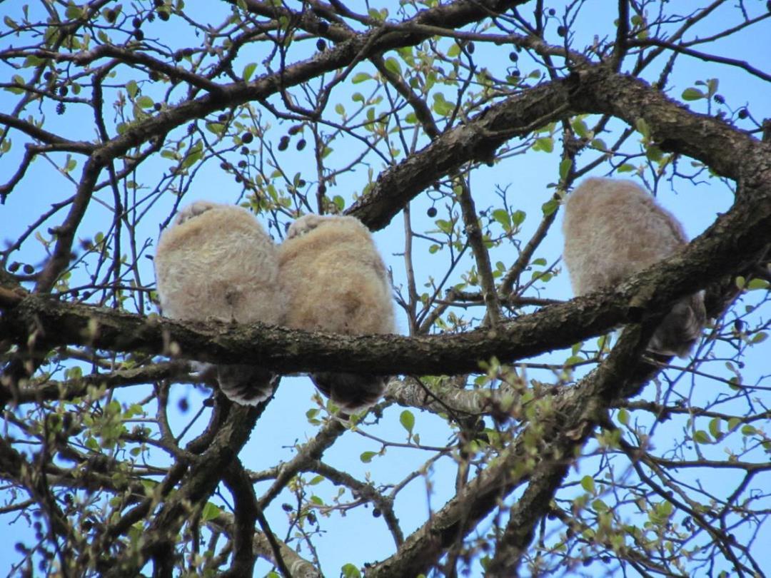 Årets gang i naturen. Er der ugler i mosen ved østenden af Sjælsø?