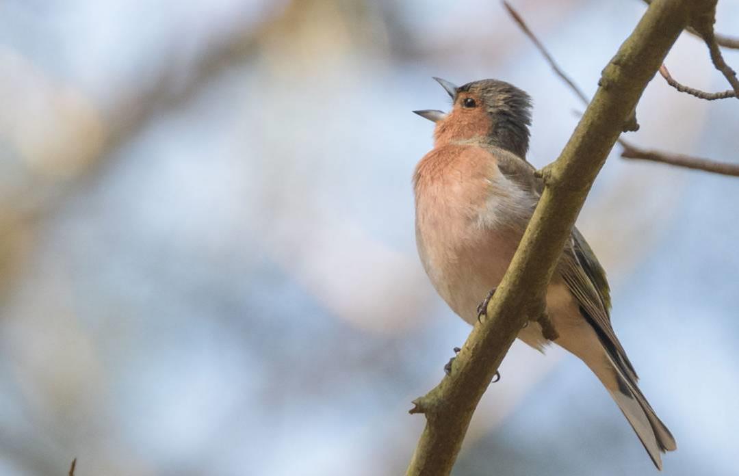 Fugletur for børnefamilier