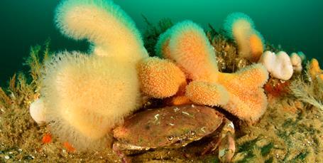 Vores sårbare natur i havet har det elendigt