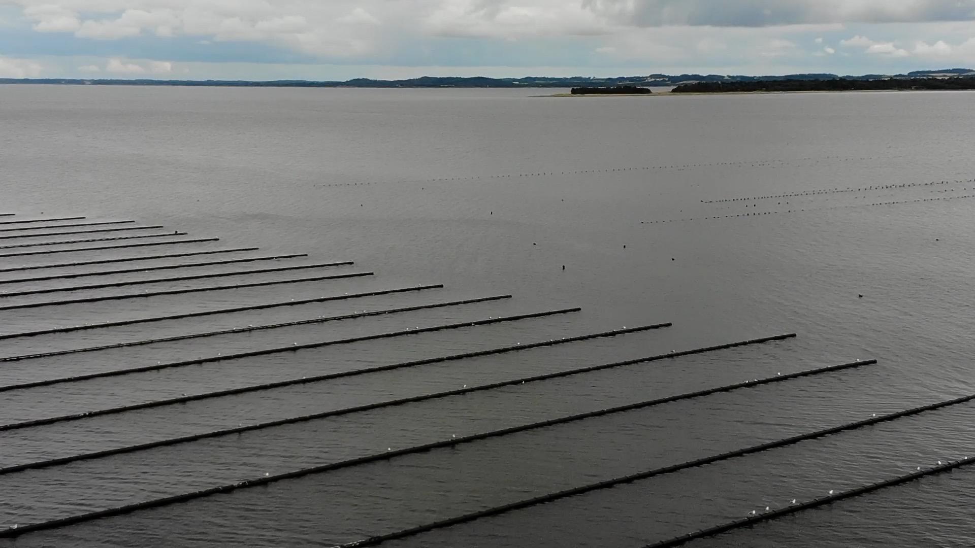Regeringen vil lægge tusindvis af muslingefarme i danskernes fjorde og kystvande