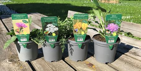 Slip haven fri: Trestjernede stauder skal lokke insekter ind i haven