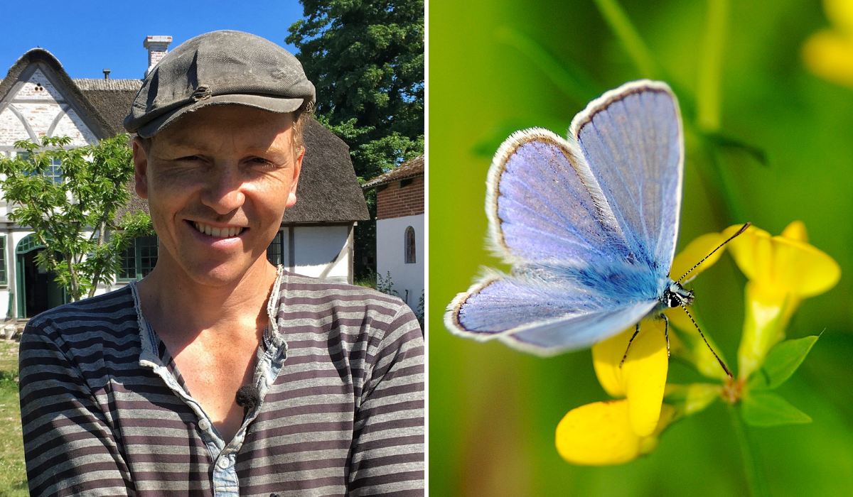 Blåfuglen er tilbage på Kastaniegaarden efter fire års fravær