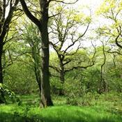 En naturperle i Midtjylland skal fredes
