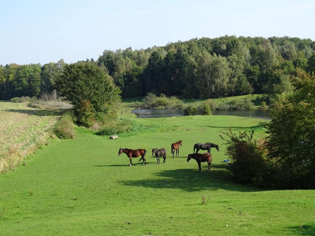 Landskabstur i Stavnsholtkilen