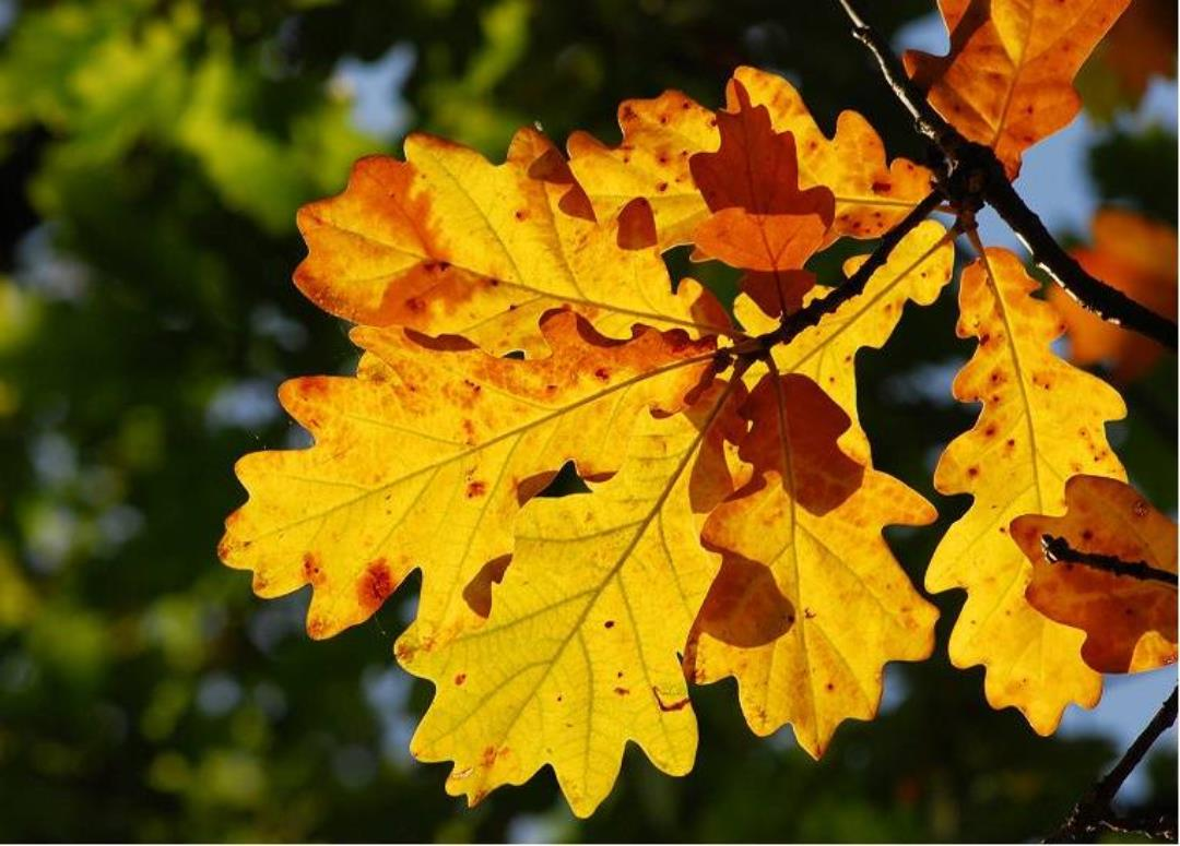 Efterårstur til Dalgårdfredningen