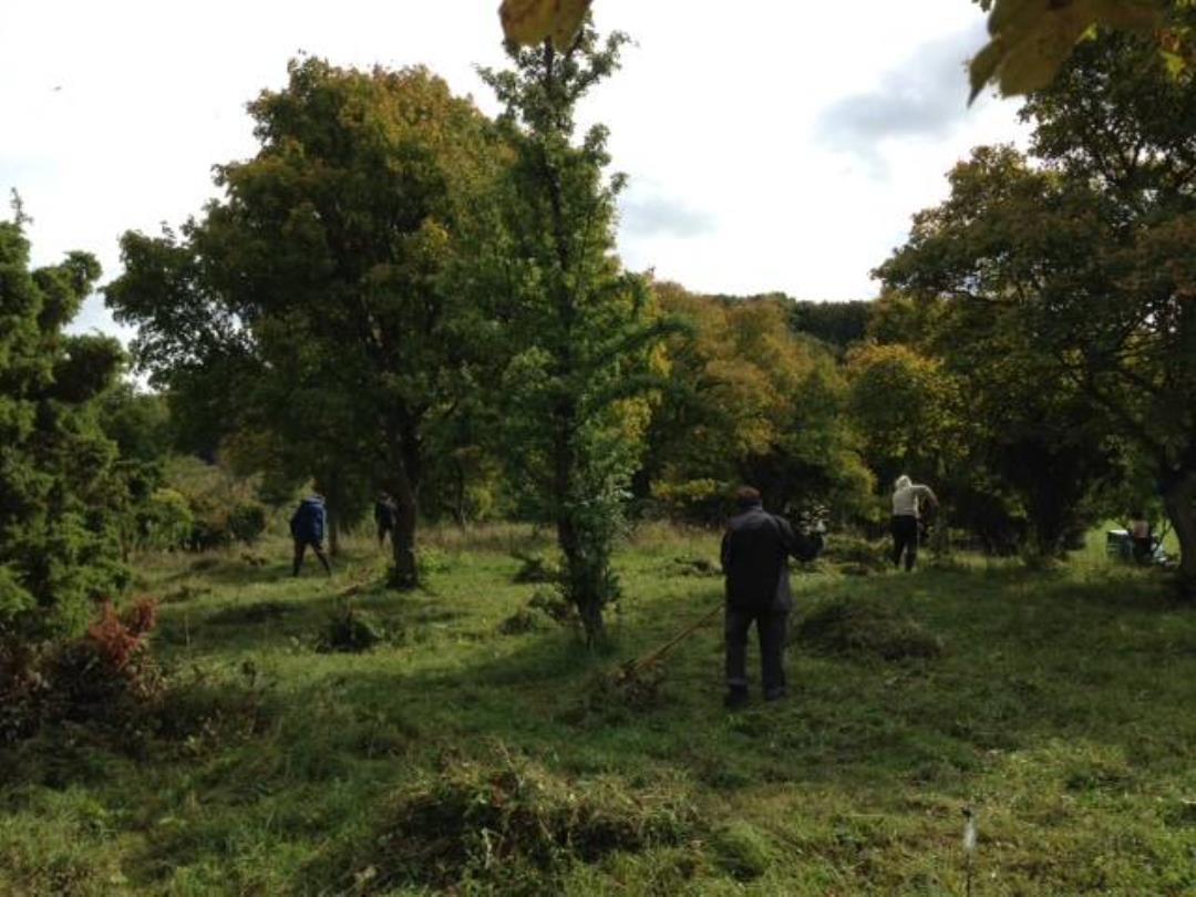 Naturpleje i Jydelejet 2021 - lørdag den 25. september. Nu med skov-fest.