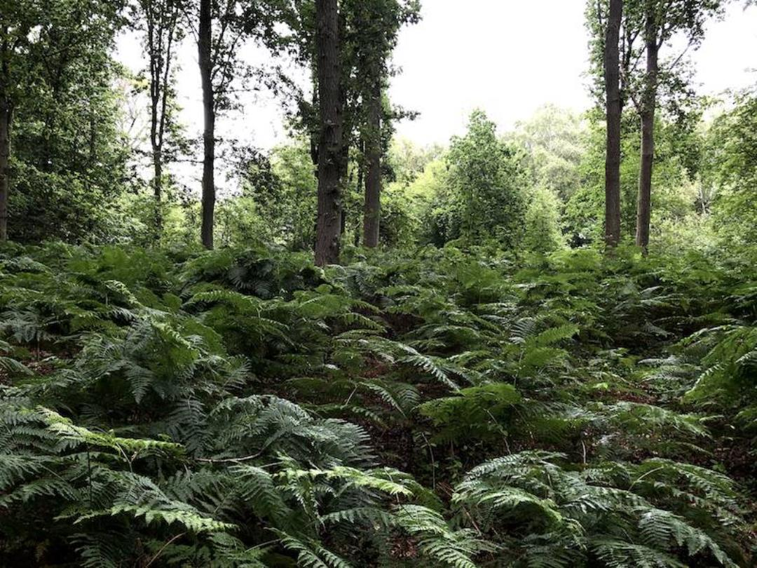 Skovtur i Søholt Storskov