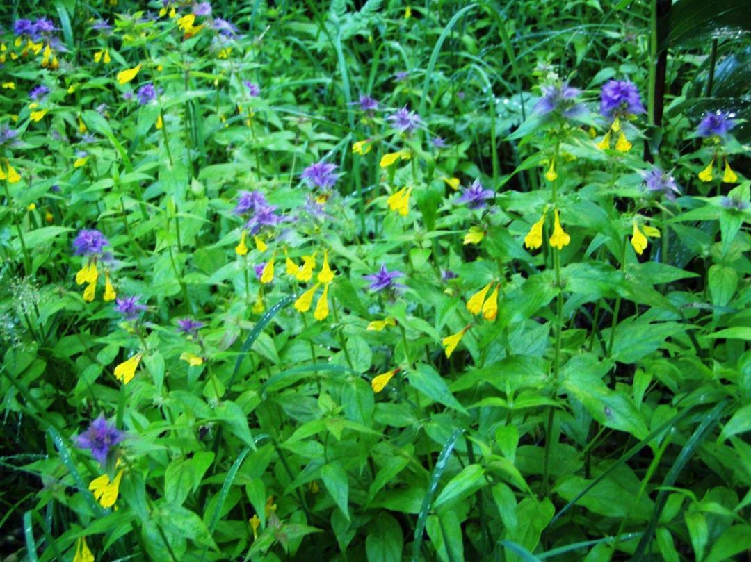 Planter for begyndere på Borrebakken og Granåsen m.m.