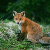 Biodiversitet i mediernes søgelys