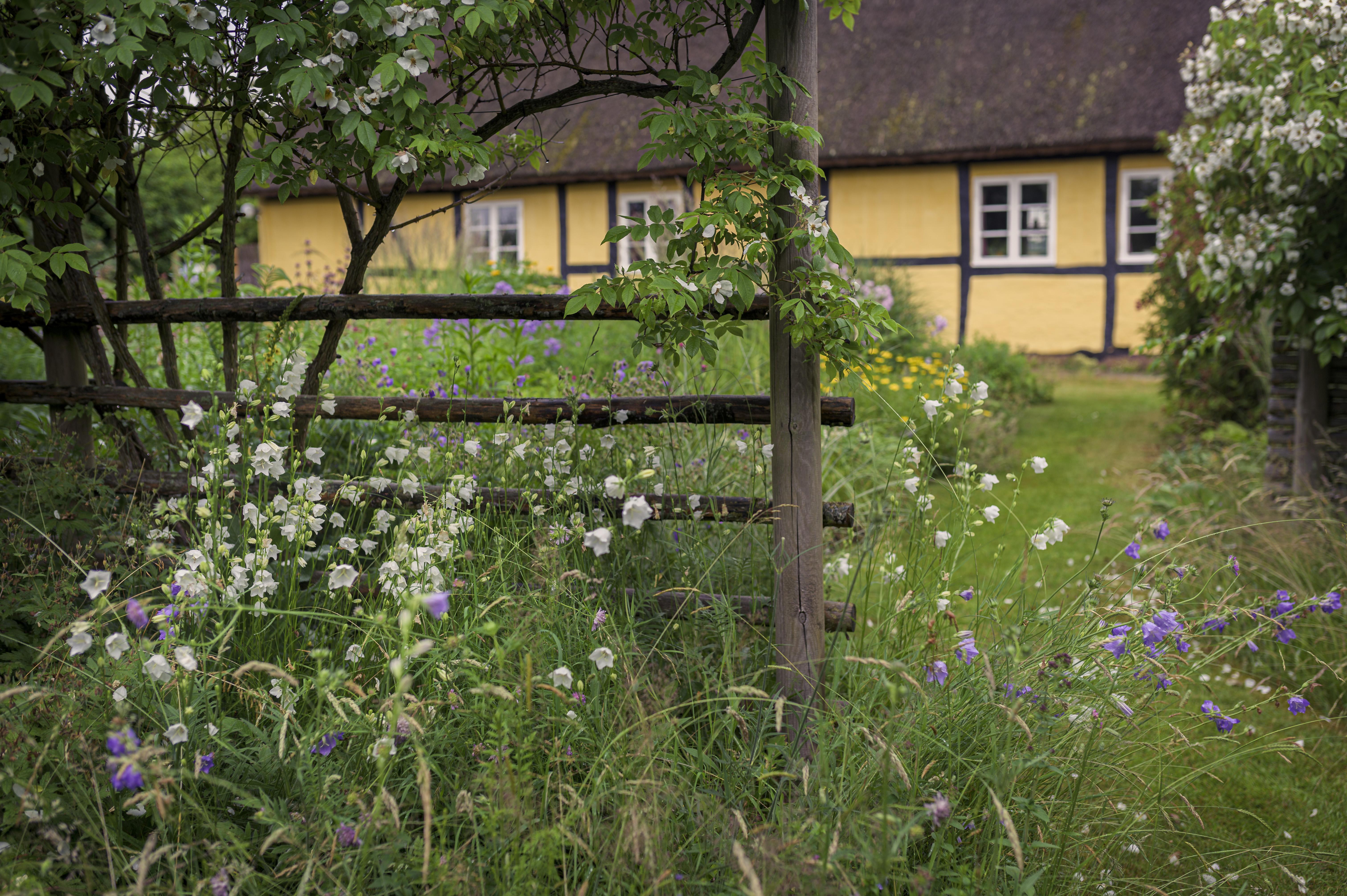 Fra kornmark til blomsterparadis: Sådan forvandlede Erik og Inge deres grund til vildeng