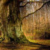 Vildere skove på vej