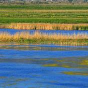 Vådområder kan blive mere end blot rensningsanlæg