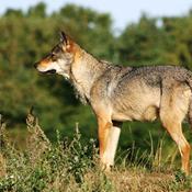 Er fredede dyr beskyttede i Danmark?