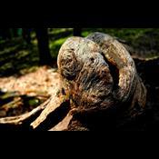 Vil du lade døde træer ligge i haven?