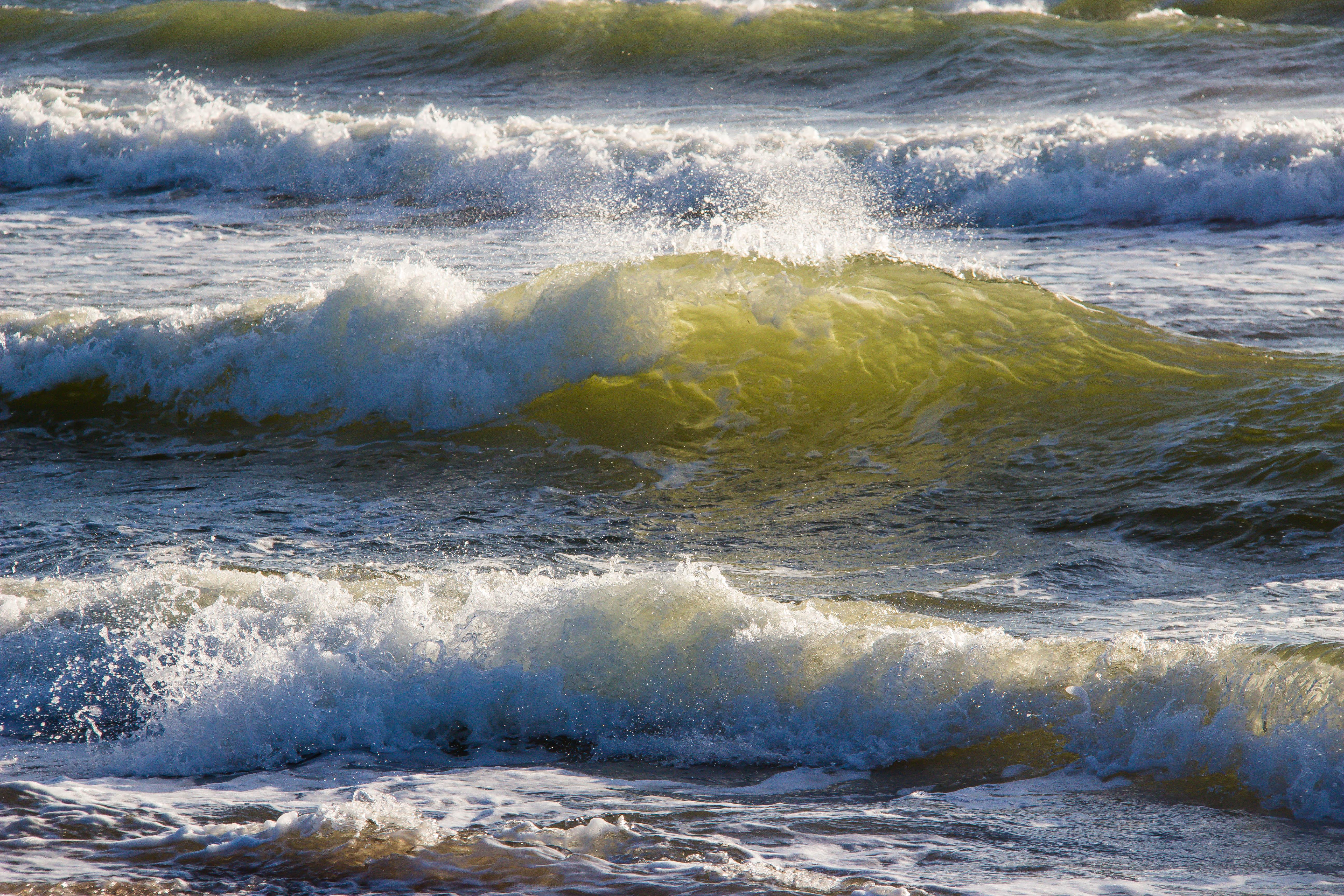 400 frivillige skal hjælpe forskere med at undersøge livet i havet