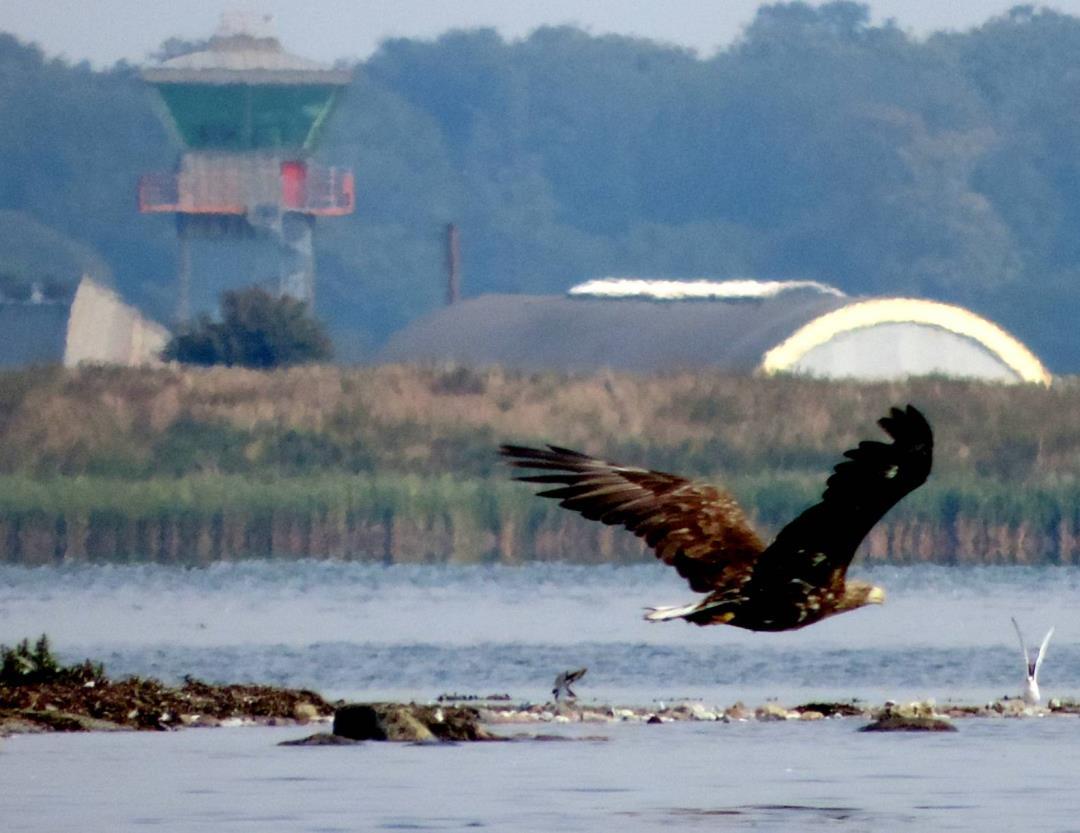 Ørnens dag på Avnø