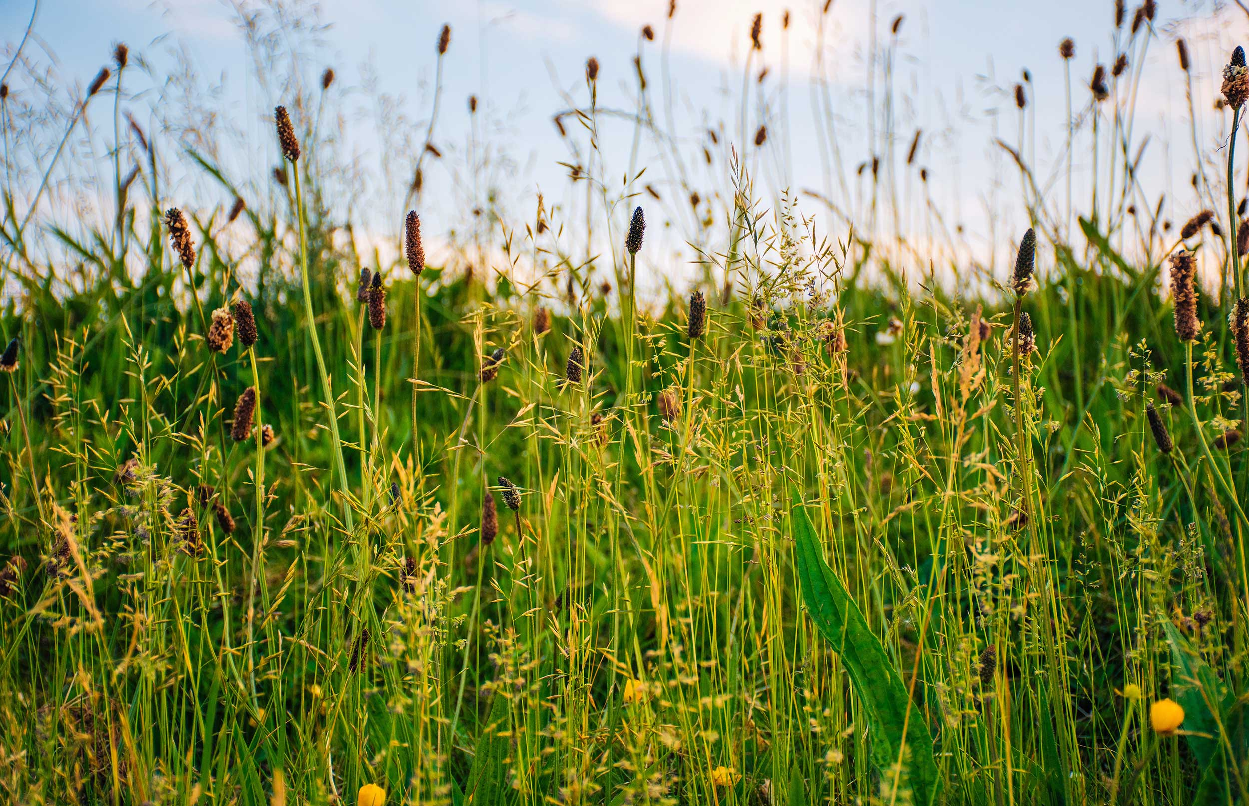 Beskyttet natur: Danmark øger bundplacering