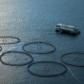 Eksperthøring: Nye havbrug vil øge forurening