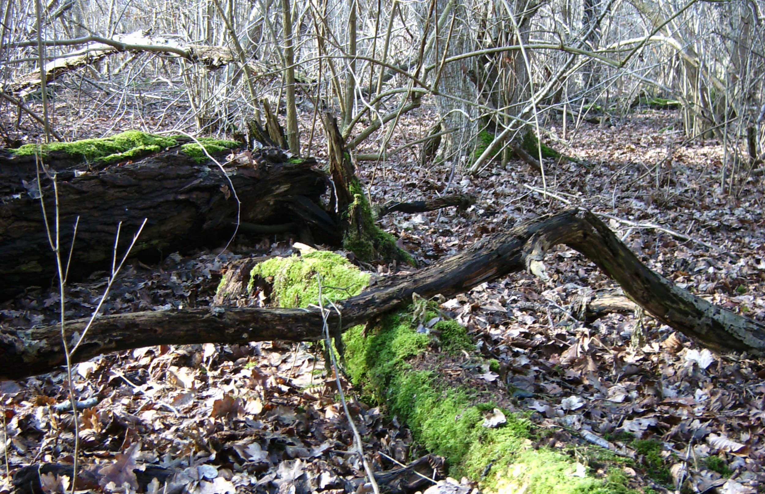 Konference: Kampen om skoven
