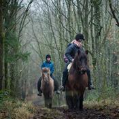 Ridning: Oplev skoven gennem hestens øjne