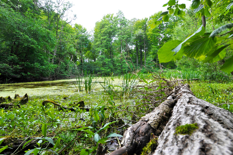 Naturtilstanden i de danske skove i dramatisk tilbagegang