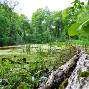 Danmarks Naturfredningsforening efterlyser bredt forlig om skovnaturen